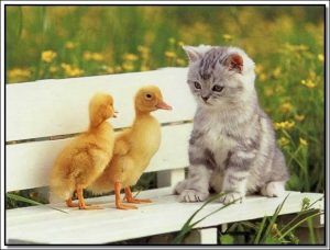 قصة القطة الصغيرة والبطتين قصص جميلة وهادفة بقلم منى حارس