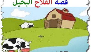 Photo of الفلاح البخيل والبقرة قصة جميلة للأطفال قبل النوم