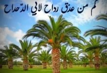 Photo of قصة أبي الدحداح والنخلة
