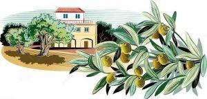 قصة أرض الزيتون