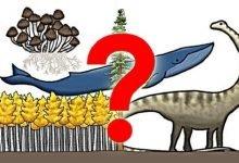 Photo of قصة اكتشاف فطر عملاق يفوق حجم الحوت الأزرق