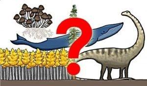 قصة اكتشاف فطر عملاق يفوق حجم الحوت الأزرق