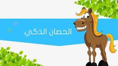 Photo of قصة الحصان الذكي