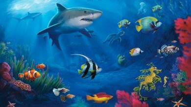 Photo of قصة الحوت لولا