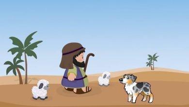 Photo of قصةالراعي إحسان والكلب يقظان
