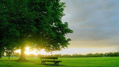 Photo of قصة الشجرة الملعونة