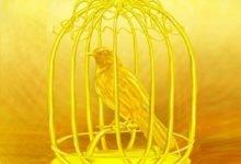 Photo of قصة العصفور الذهبي