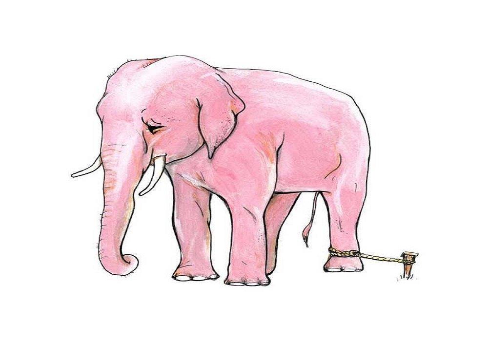 قصة الفيل المربوط بالسلاسل