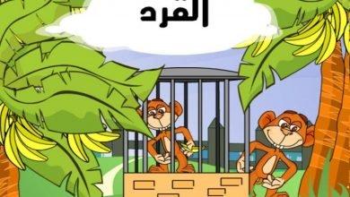 Photo of قصة القرد المنحوس