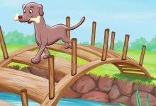 Photo of قصة الكلب الطماع