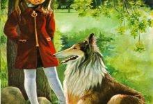 Photo of قصة الكلب الوفي