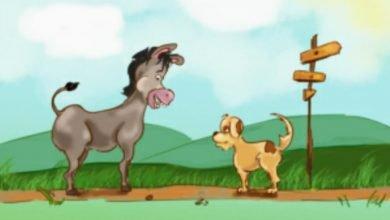 Photo of قصة الكلب والحمار