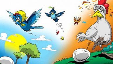 Photo of قصة بيضة الدجاجة