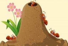 Photo of قصة تعاون النملات الصغيرات