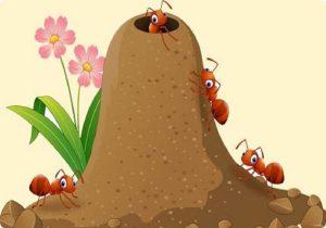 قصة تعاون النملات الصغيرات