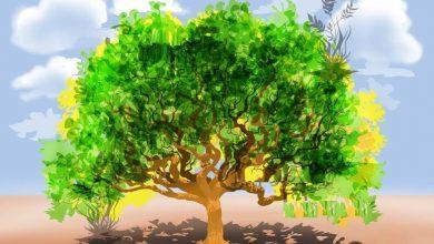 Photo of قصة شجرة الأمنيات
