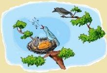 Photo of قصة طائر الوقواق