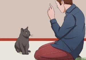 قصة في بيتنا قطة