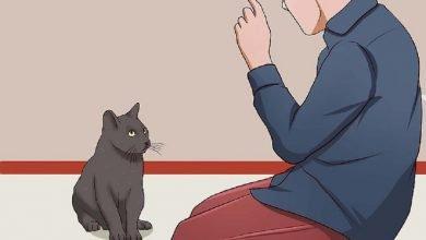 Photo of قصة في بيتنا قطة